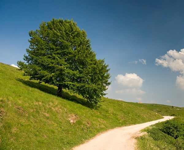 Backgrounds Scenic A (13)