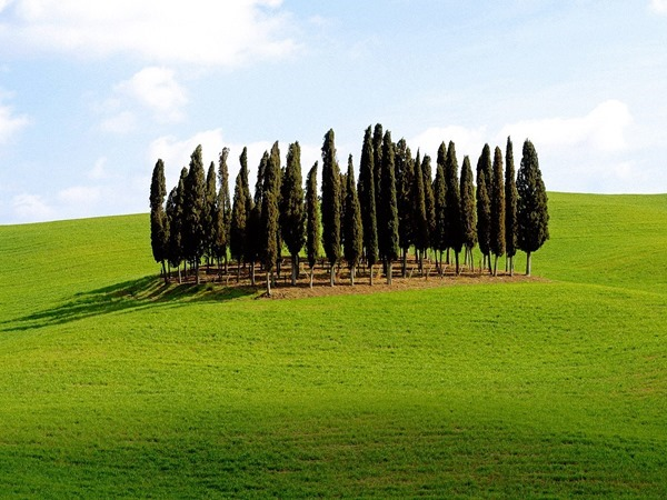 Backgrounds Scenic B (7)