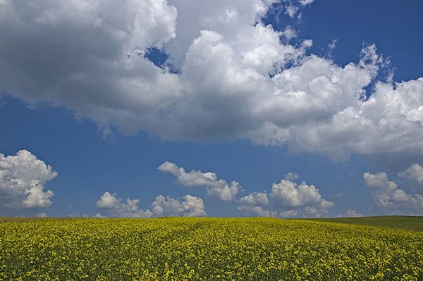 Backgrounds Scenic A (6)